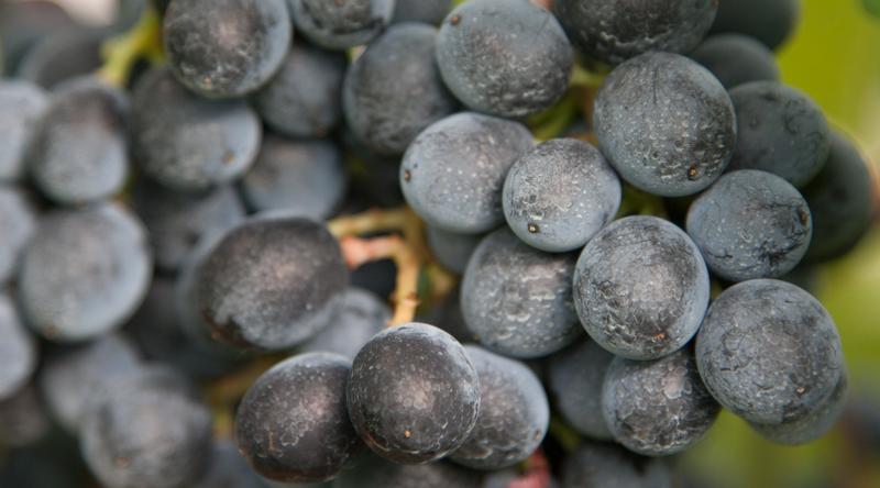 Venerdì 11 marzo - Pianificazione urbanistica per una viticoltura di qualità